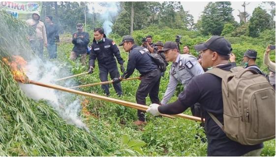 Photo of Mabes Polri Musnahkan 10 Hektar Ladang Ganja