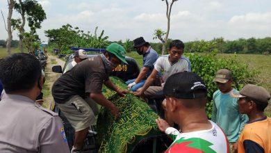 Photo of Diduga Kelelahan, Petani Warga Blora Ditemukan Tewas di Sawah