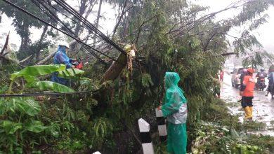 Photo of Pohon Tumbang, Arus Lalu Lintas Purbalingga – Pemalang Tersendat