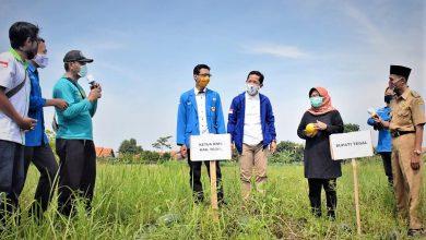Photo of Anggota KNPI Kabupaten Tegal Mengais Rejeki Lewat Manisnya Semangka 'Inul'