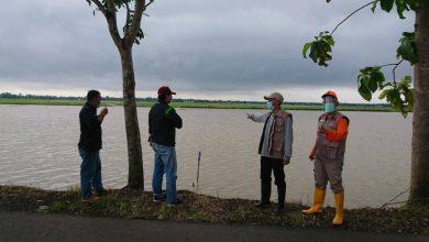 Photo of Terendam Banjir 30 Hektar Lahan Kedelai Hitam di Kemangkon Terancam Gagal Panen