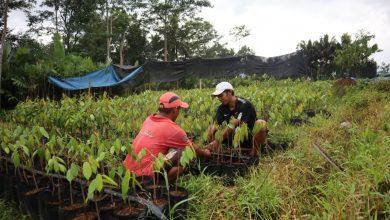 Photo of Petani Milenial Banjarnegara Kembangkan Durian Simimang, Tembus Pasar  Luar Jawa