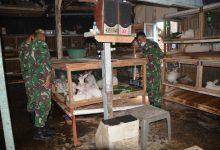 Photo of Kisah Inspiratif Kopda Atmoko; Awalnya Dicemooh, Kini Sukses Beternak Kelinci Pedaging