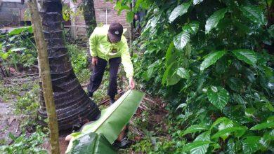 Photo of Penderes Tewas Jatuh dari Pohon Kelapa