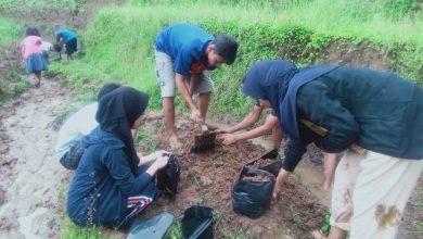 Photo of Peduli Lingkungan, Pelajar Tanam Jahe