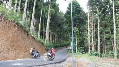 Photo of Jalan Hutan itu Kini Halus dan Diterangi Lampu