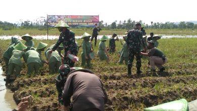 Photo of Prajurit Yonif 405/Surya Kusuma Panen Raya Bawang Merah