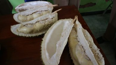 Photo of Mencicipi Legitnya Durian 'Kartana' Asli Desa Nangkod