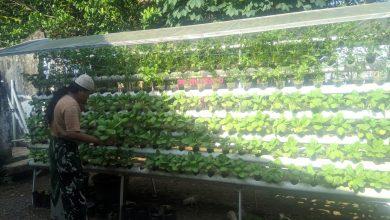 Photo of Bertani Hidroponik Ketahanan Pangan Mandiri saat Pademi
