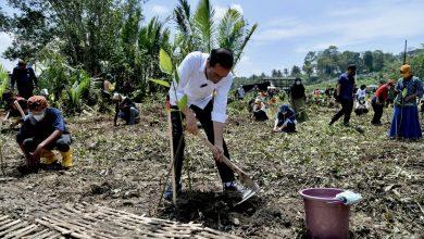 Photo of Tanam Mangrove Bersama Masyarakat Cilacap, Presiden: Untuk Antisipasi dan Mitigasi Perubahan Iklim