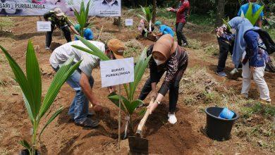 Photo of Petani Purbalingga Terima Bantuan 2.700 Bibit Kelapa Organik Dari Kementerian Pertanian