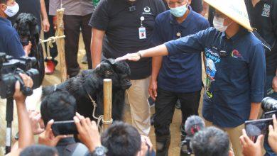 Photo of Peternak Kambing dan Supir Jeep Pandanrejo Nilai Sandiaga Uno Sosok Menteri yang Merakyat